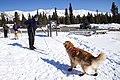 Skijour Prep at Mountain Vista (8641827424).jpg