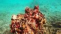 Snorkeling Playa Funchi, Bonaire (12841274863).jpg