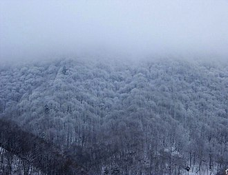 Shiloh Youth Revival Centers - Image: Snow Land