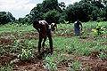 Somalia farmers3.jpg