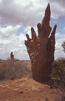 Виды термитов и их гнезда