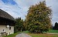 Sommerlinde in Glanhofen.jpg