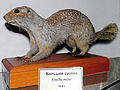 Spermophilus major (emendabatur).jpg