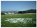 Spring Homfleet-Cigogne arrived Southern Germany HABITAT - Magic Rhine Valley Photography - panoramio.jpg