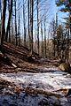 Spring Trail (3600181329).jpg