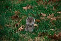 Squirrel (22545627754).jpg