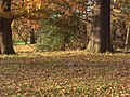 Squirrels in Roundhay Park - panoramio.jpg