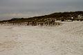 St Andrews State Park Dune.jpg