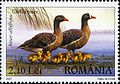 Stamps of Romania, 2007-060.jpg