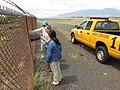 Starr-170824-0441-Chloris barbata-Noe Kim and Leyla setting up bee monitoring stations-Kahului Airport-Maui - Flickr - Starr Environmental.jpg