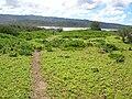 Starr 050222-4214 Jacquemontia ovalifolia subsp. sandwicensis.jpg