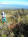 Starr 050815-3319 Leptecophylla tameiameiae.jpg