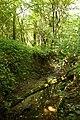 Steenbergse bossen 23.jpg