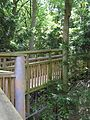 Still going up - The Tree Top Way - July 2009 - panoramio.jpg