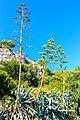 Strange plant (20703394479).jpg