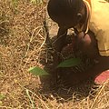 Student planting trees 04.jpg