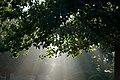 Sun rays (6238219528).jpg