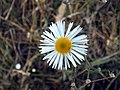 Sunny flower.jpg