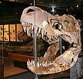 T. rex MOR 008.jpg