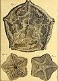 Tableau encyclopédique et méthodique des trois règnes de la nature (1791) (14581455159).jpg