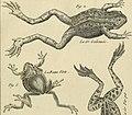 Tableau encyclopédique et méthodique des trois règnes de la nature - dédié et présenté a M. Necker, ministre d'État, and directeur général des Finances (1789) (14595897937).jpg