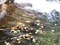 Taiping Forest Park 太平森林公园 (5219761320).jpg