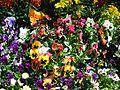 Teignmouth Blooms Again - 11 - Flickr - Sir Hectimere.jpg