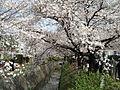 Tetsugakunomichi02.jpg