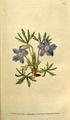 The Botanical Magazine, Plate 89 (Volume 3, 1790).png
