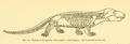 The Osteology of the Reptiles-262 kjh rty.png