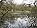 The Third Pond from the West, Bookham Common - geograph.org.uk - 1237624.jpg