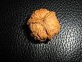 Three-sided walnut.JPG