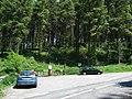 Tibradden Pine Forest - geograph.org.uk - 465469.jpg