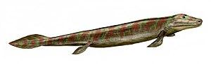 Tetrapod - 70 px