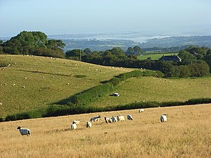 Toller Down - Toller Down: rolling pastures above a misty valley looking towards Yeovil.