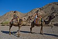 Tourists riding camels near Eilat.jpg