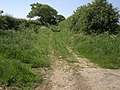 Track running south west to meet Peddars Way - geograph.org.uk - 453816.jpg