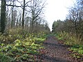 Track through Black Dog Woods - geograph.org.uk - 295175.jpg