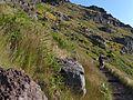 Trail from Achada do Teixeira to Pico Ruivo, Madeira, Portugal, June-July 2011 - panoramio (16).jpg