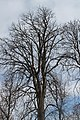 Tree, Auvergne.jpg