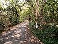 Tree besides road.jpg