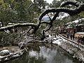 Trees around Shinjiike Pond in Dazaifu Temman Shrine in a snowy day.JPG