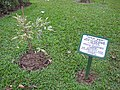Trees planted by foreign dignitaries in the park of Jatiyo Smriti Soudho 06.jpg