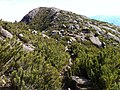 Trilha Pico da Bandeira - panoramio (17).jpg