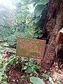 Tronc du kolatier au Jardin des Plantes et de la Nature.jpg