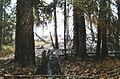 Tyresta branden 1999a.jpg