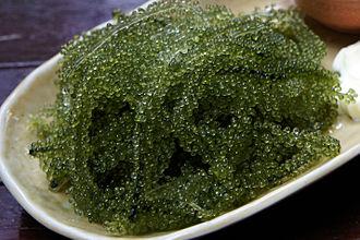Edible seaweed - Image: Umibudou at Miyakojima 01s 3s 2850