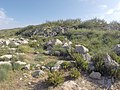 Unnamed Road, Ħaż-Żabbar, Malta - panoramio (2).jpg