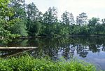 A pond in Uwharrie National Forest.