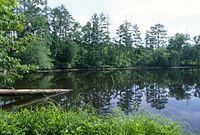 Uwharrie National Forest.jpg